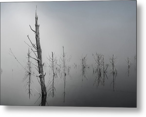D1087 - Theewaterskloof Trees Metal Print