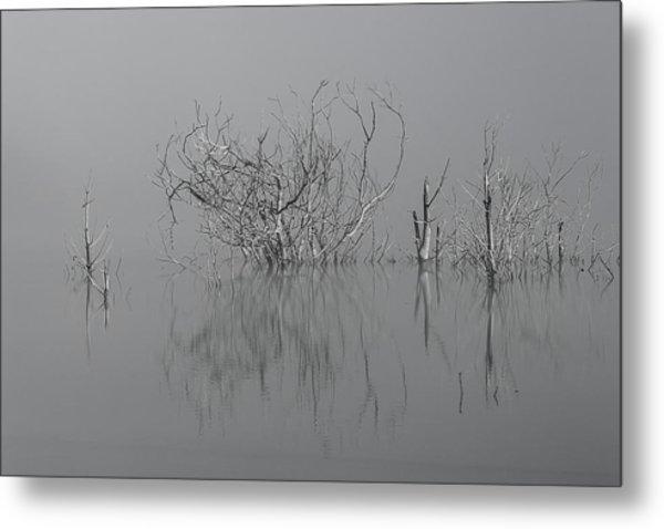 D1093 - Theewaterskloof Trees Metal Print