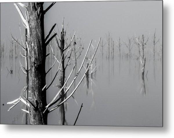 D1095 - Theewaterskloof Trees Metal Print