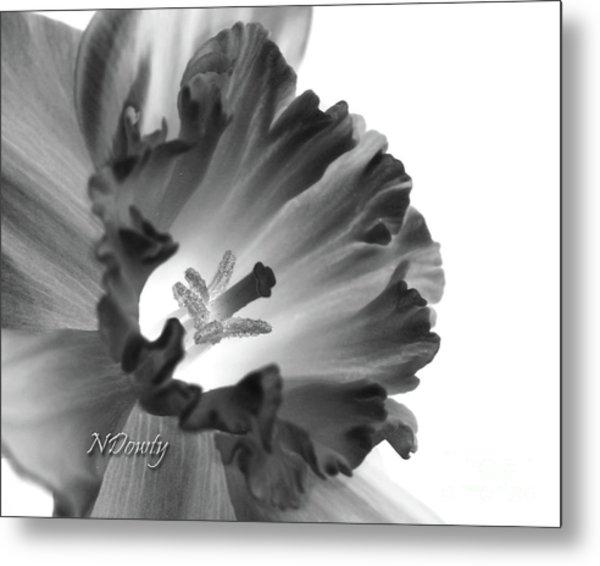 Daffodil Cornered Metal Print
