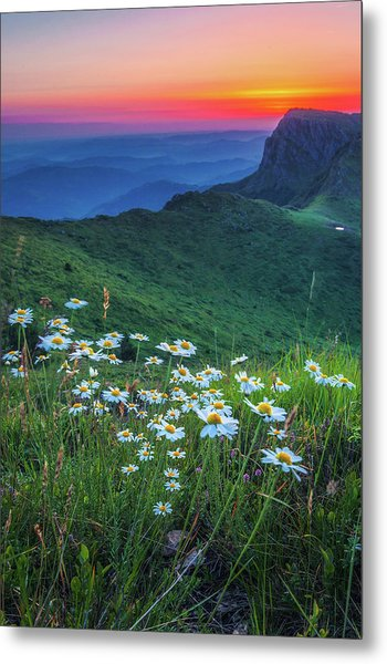 Daisies In The Mountain Metal Print