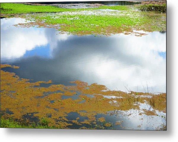 Damselfly Pond - 19 4498 Metal Print