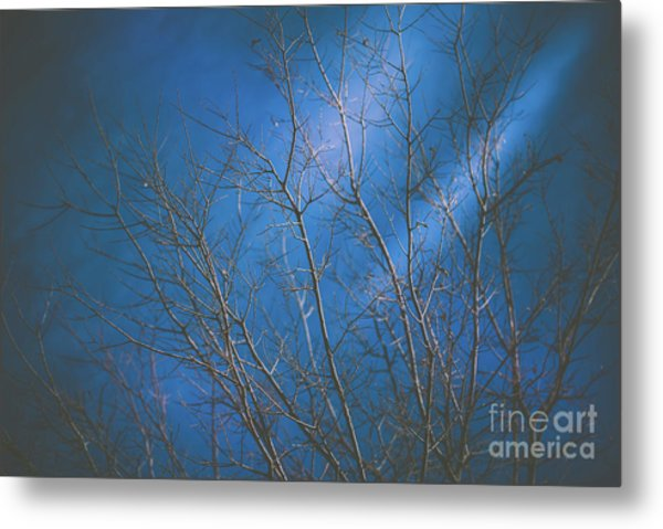Dark Winter Metal Print