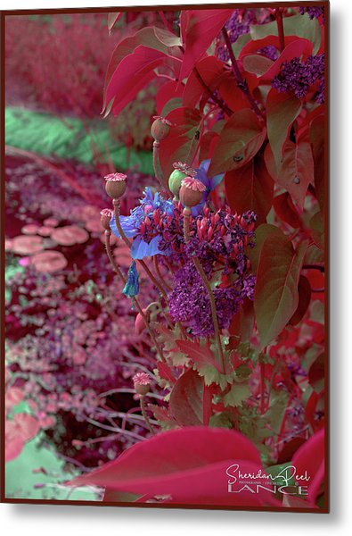 Day Of Red Metal Print