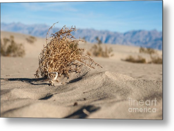 Dead Sagebrush Lies On Sand In Desert Metal Print