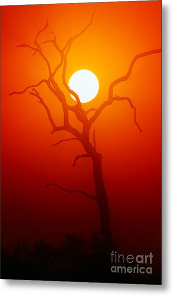 Dead Tree Silhouette With Dusty Sunset Metal Print by Johan Swanepoel
