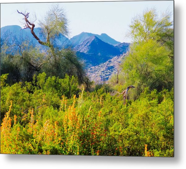 Deep Desert Valley In A Sonoran Desert Spring Metal Print