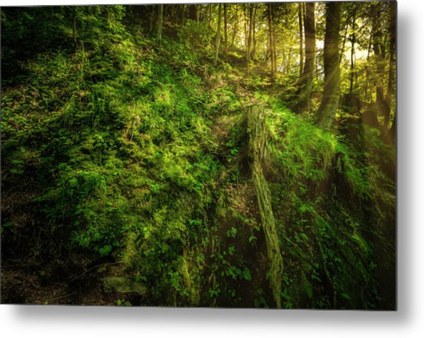 Metal Print featuring the photograph Deep In The Forests Of Bavaria by David Morefield