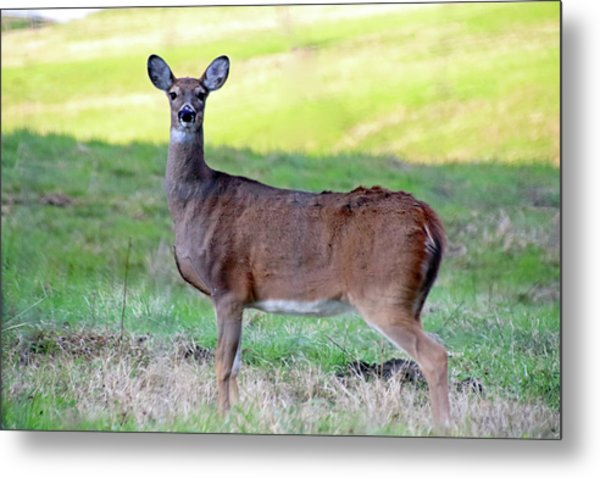 Metal Print featuring the photograph Deer Standing In A Field by Angela Murdock