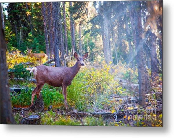 Deer Standing In Sunshine In Forest Metal Print