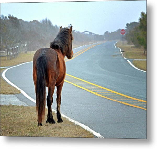 Metal Print featuring the photograph Delegate's Pride Awaiting Tourists On Assateague Island by Bill Swartwout Fine Art Photography