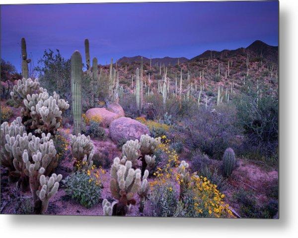 Desert Garden Metal Print by Ericfoltz