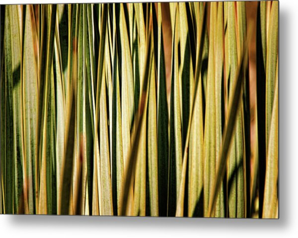Metal Print featuring the photograph Desert Grasses I by Leda Robertson