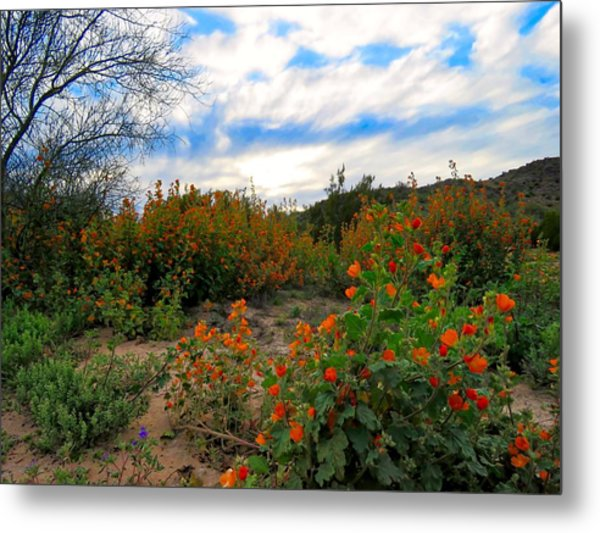Desert Wildflowers In The Valley Metal Print
