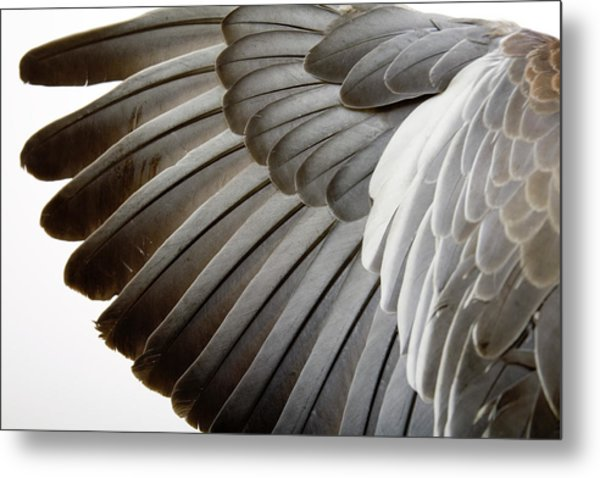 Detail Of A Wing Metal Print by Grafissimo
