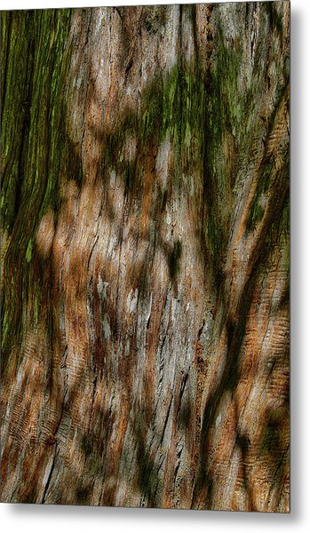 Detail Of Bark On Huge  Tree Metal Print