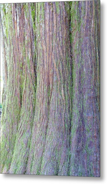 Details, Old Growth Western Redcedar Metal Print