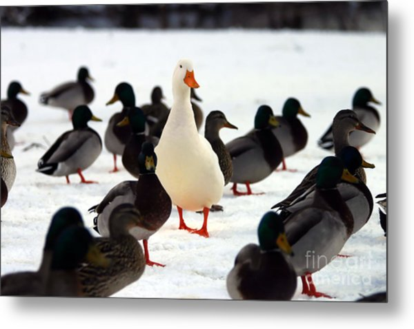 Do You Stand Out From The Crowd  A Metal Print