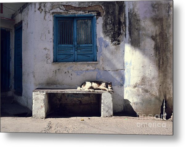 Dog Sleeps On A Bench Outdoor In Metal Print by Sergio Capuzzimati