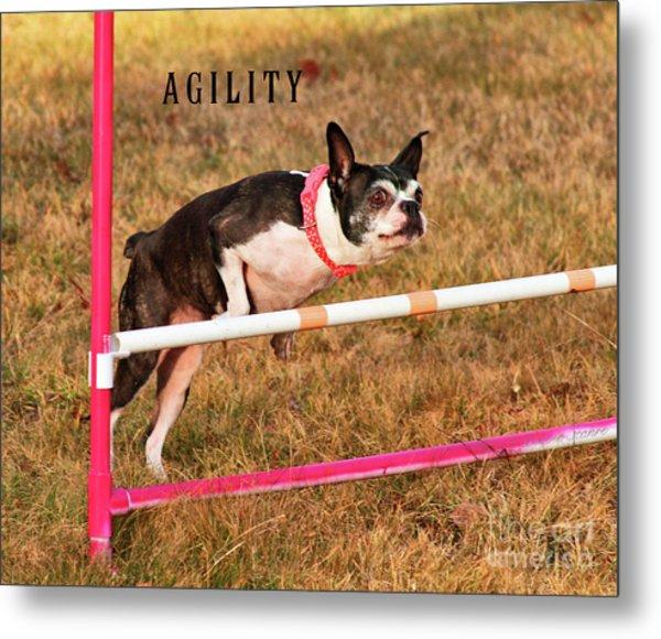 Doggie Agility  Metal Print