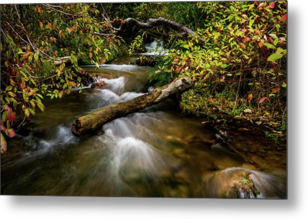Metal Print featuring the photograph Dogwoods Along The Provo Deer Creek by TL Mair