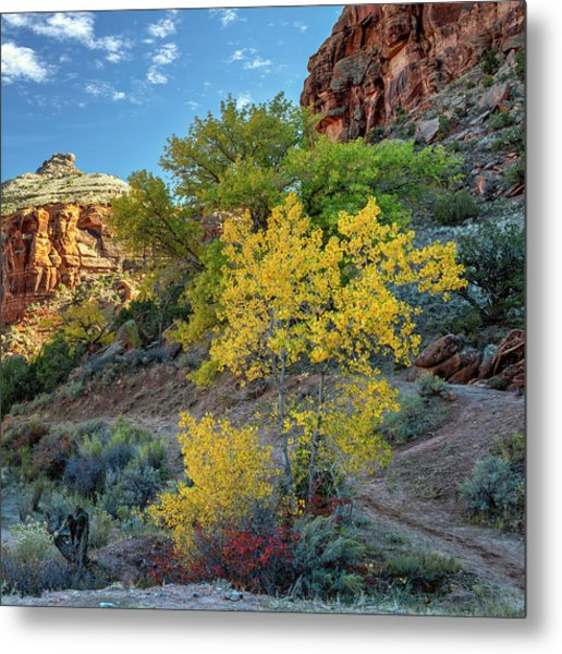 Metal Print featuring the photograph Dominguez Gold by Angela Moyer