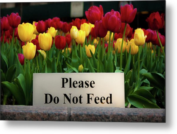 Dont Feed The Tulips Metal Print