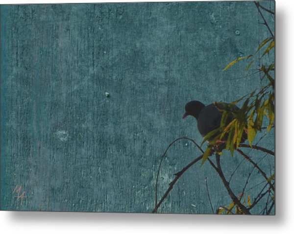 Metal Print featuring the photograph Dove In Blue by Attila Meszlenyi