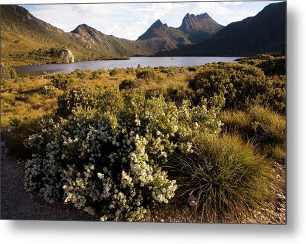 Dove Lake And Cradle Mountain Metal Print