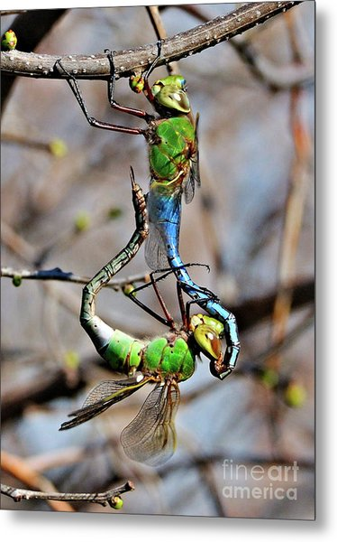 Dragonfly Love Metal Print