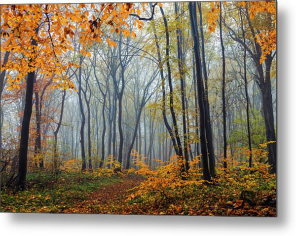 Dream Forest Metal Print