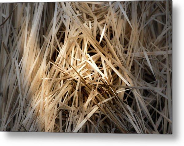 Dried Wild Grass I Metal Print