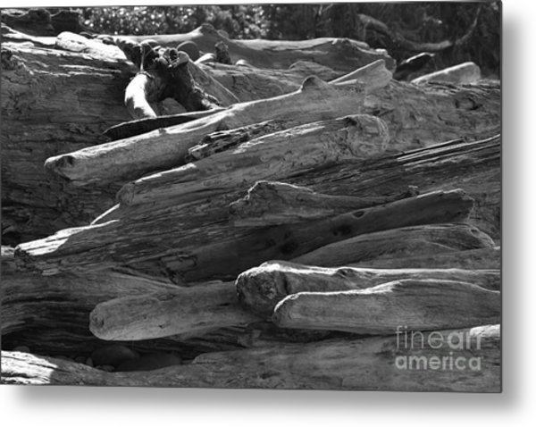 Drifted Wood Metal Print