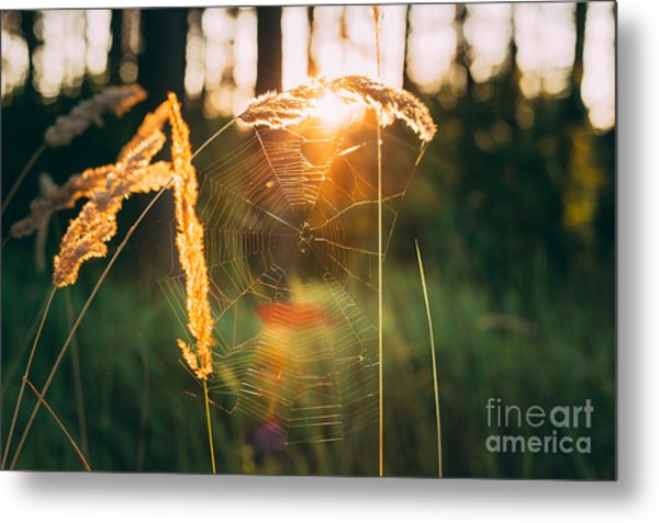 Dry Green Grass Field In Sunset Metal Print