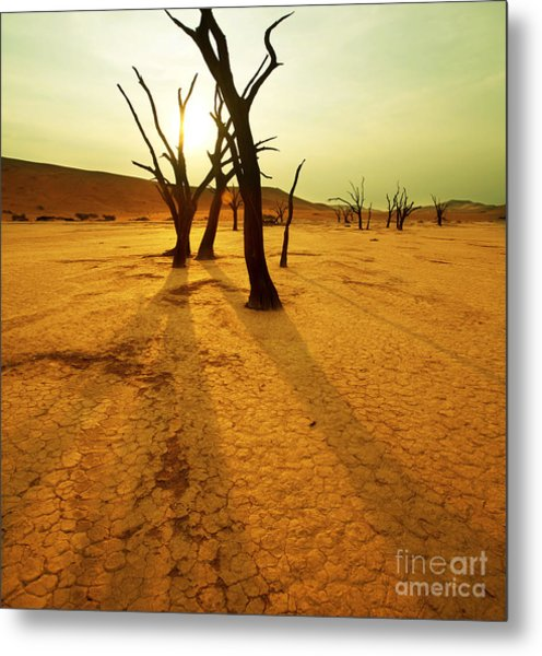 Dry Trees In Namib Desert Metal Print