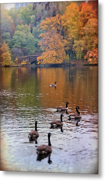 Metal Print featuring the photograph Ducks In The Muddy River - Olmsted Park  by Joann Vitali
