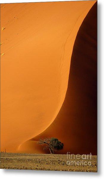 Dune 40 And Acacia Tree At Sunrise Metal Print