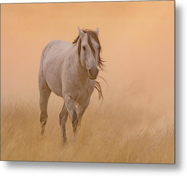 Dusty Evening Metal Print