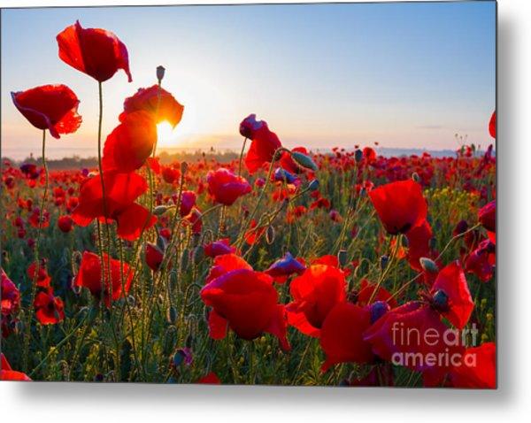 Early Morning Red Poppy Field Scene Metal Print