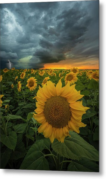 Metal Print featuring the photograph Eccentric  by Aaron J Groen