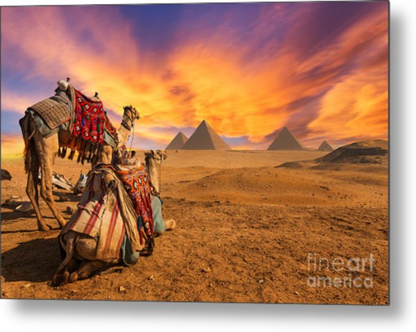 Egypt. Cairo - Giza. General View Of Metal Print