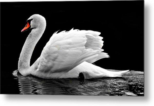 Elegant Swan Metal Print
