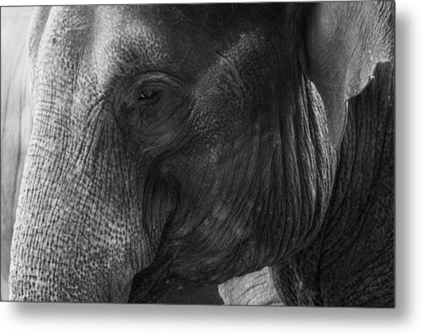 Elephant Metal Print by Andrew Dernie