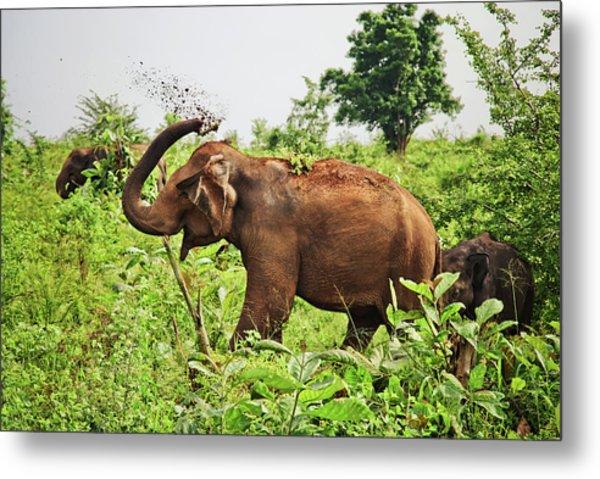 Elephant Metal Print by Basia Asztabska