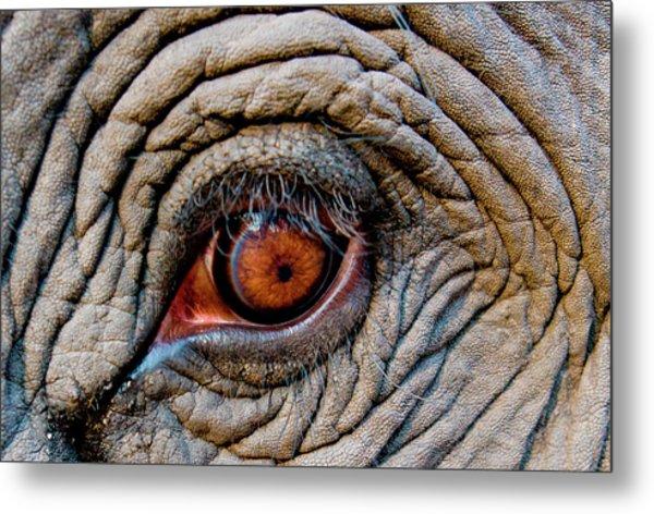 Elephant Eye, Bandhavgarh National Metal Print
