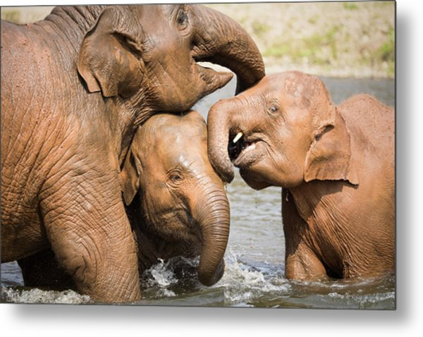 Metal Print featuring the photograph Elephant Family by Nicole Young