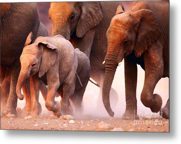 Elephant Herd On The Run In Etosha Metal Print