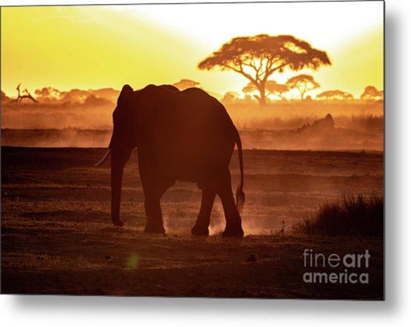 Elephant Walking Through Amboseli At Sunset Metal Print
