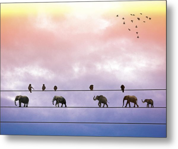 Elephants On The Wires Metal Print