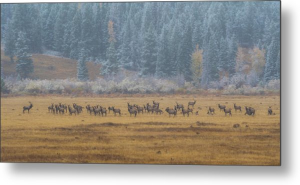 Elk On A Snowy Autumn Day Metal Print